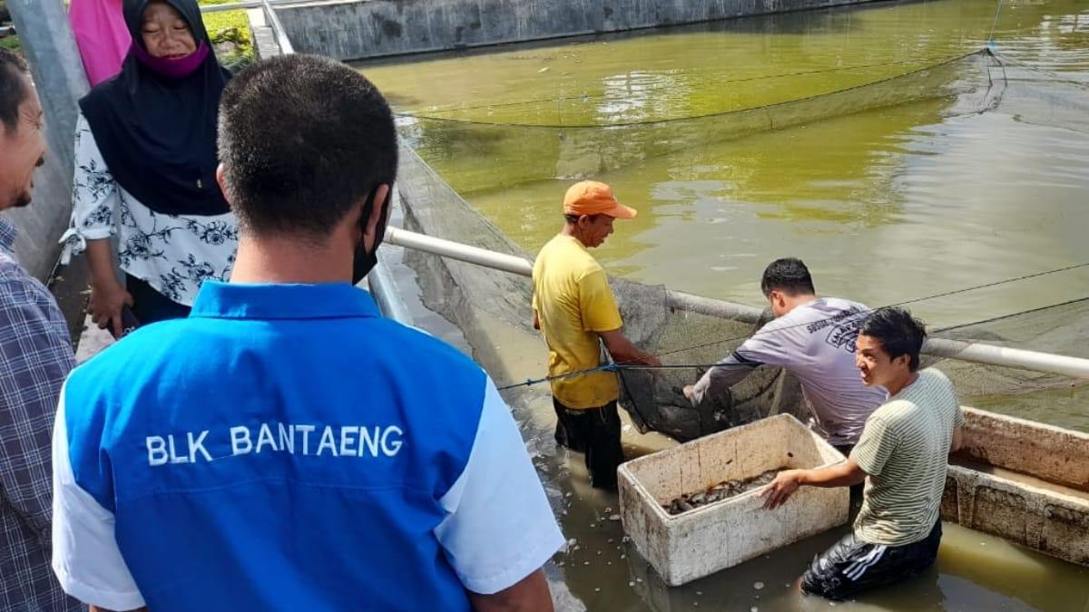 BLK Bantaeng, Gelar Pelatihan Budi Daya Ikan Air